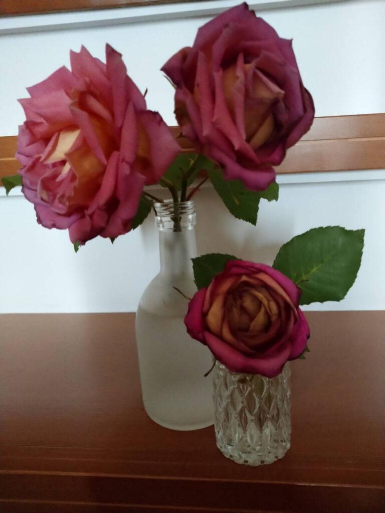バラが咲いた画像